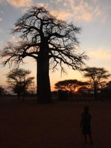 Baobab alla luce del tramonto in Tanzania