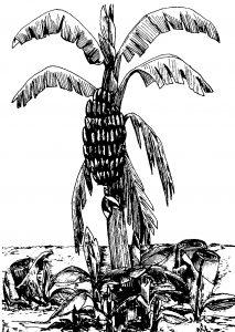 """""""Dio è come il banano: genera senza intervento di agenti esterni"""""""